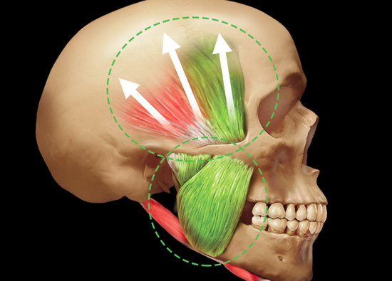 Learn more about the fundamentals of occlusion!