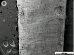Figure 2D  Scanning electron micrographs of tooth slices subjected to the standard jet tip treatment for 3 seconds.